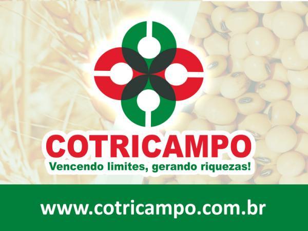 Cotricampo divulga cotação dos produtos agrícolas desta segunda-feira (8)