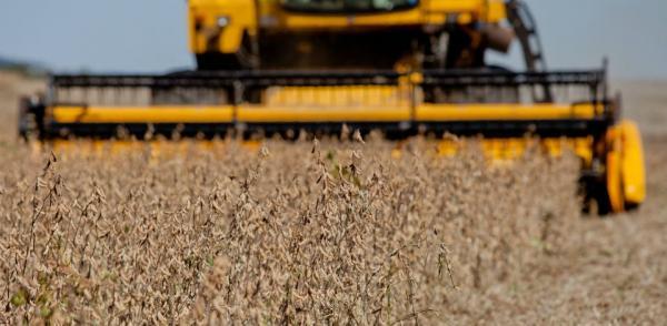 Brasil deve produzir 238 milhões de toneladas na próxima safra de grãos