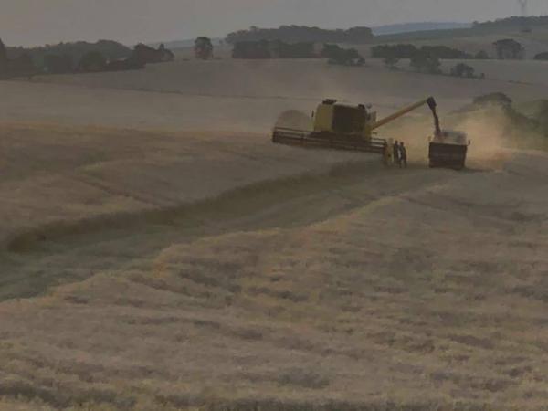 Baixa produtividade do trigo faz produtores do Rio Grande do Sul acionarem o Proagro