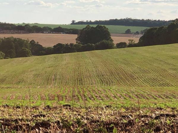 CONAB: Safra de grãos chegará a 238,4 milhões de toneladas
