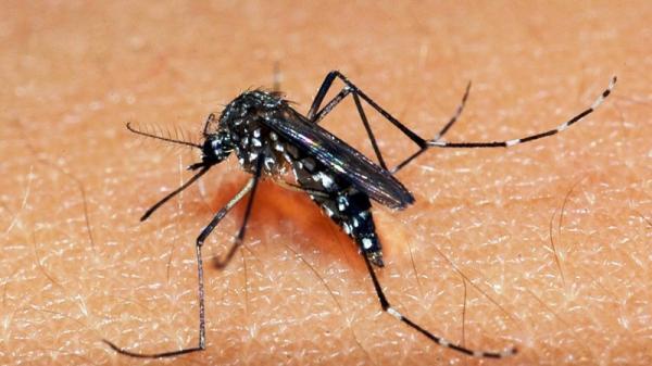 RS registra o primeiro caso autóctone de dengue no ano