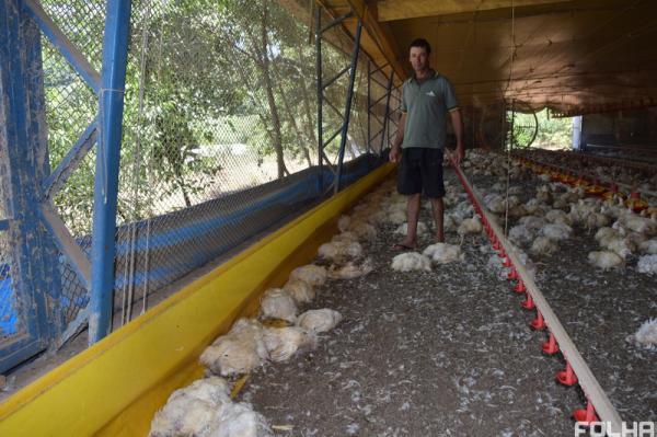 Mais de dez mil frangos morrem após interrupção de energia