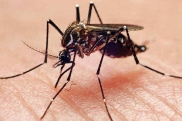 Toda a Região Celeiro está sob alerta de infestação do mosquito Aedes Aegypti
