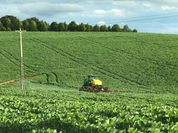 Lavouras gaúchas de soja apresentam boa produtividade