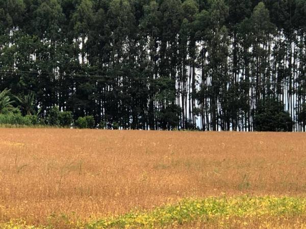 Emater-Ascar atualiza expectativas de safra para as principais culturas de verão