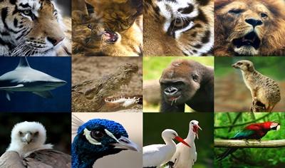 Um milhão de espécies correm risco de extinção