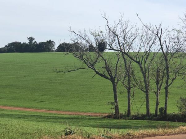 Região Noroeste registra avanço no plantio de trigo