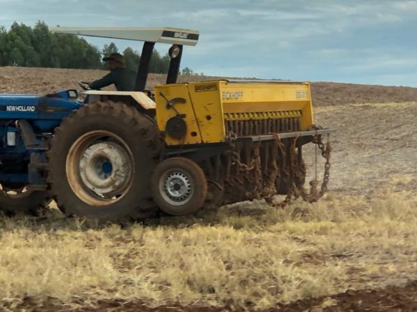 Plantio de trigo alcança 73% da área estimada para o Estado
