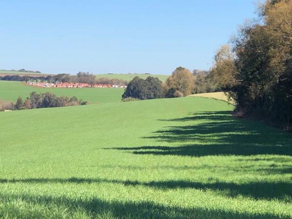 CONAB estima produção nacional de grãos em 241,3 milhões de toneladas