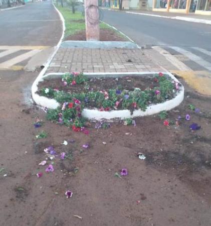 Vândalos destroem canteiros no centro de Miraguaí