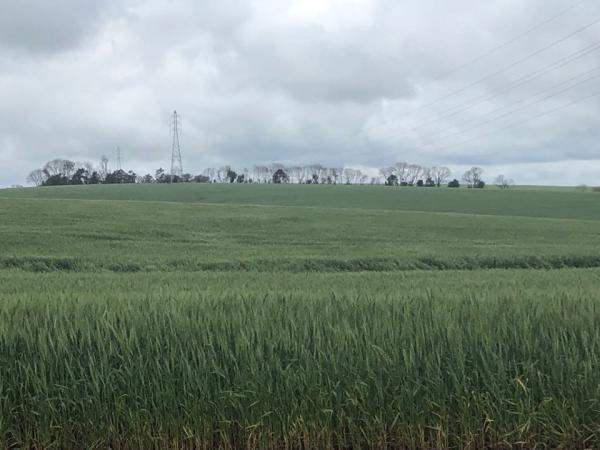 Lavouras de trigo no Rio Grande do Sul começam a entrar em período considerado crítico