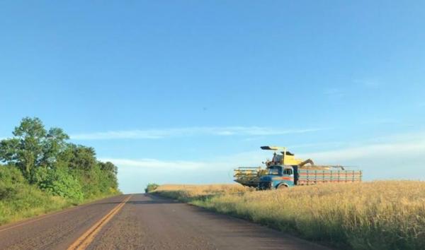 Colheita de trigo atinge 1% da área cultivada no Rio Grande do Sul