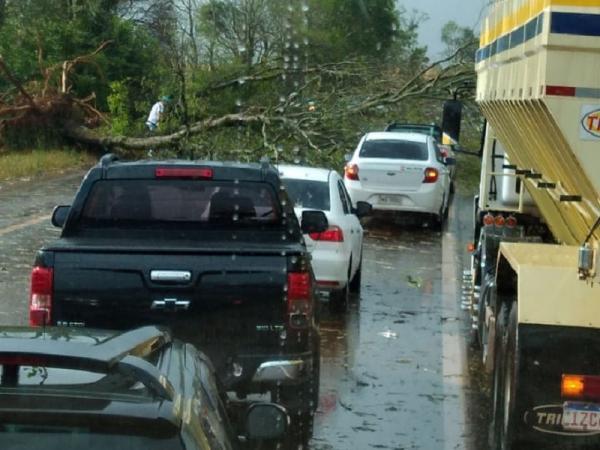 Temporal derruba árvores na ligação entre Ijuí e Santo Augusto