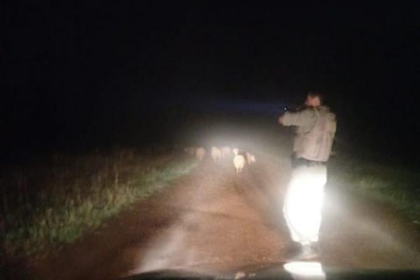 Brigada Militar frustra ação de abigeatários em Santo Antônio das Missões