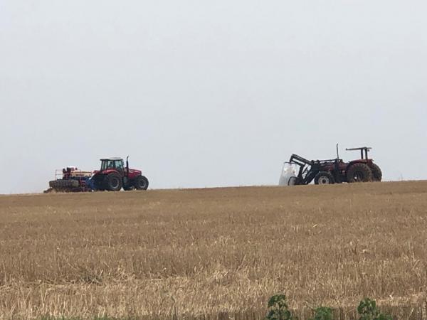 Primeiras lavouras de soja entram na fase de germinação