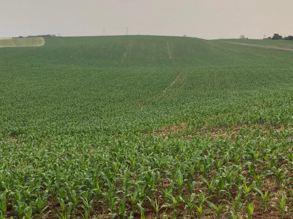 Alta umidade dificulta o plantio de milho no Rio Grande do Sul