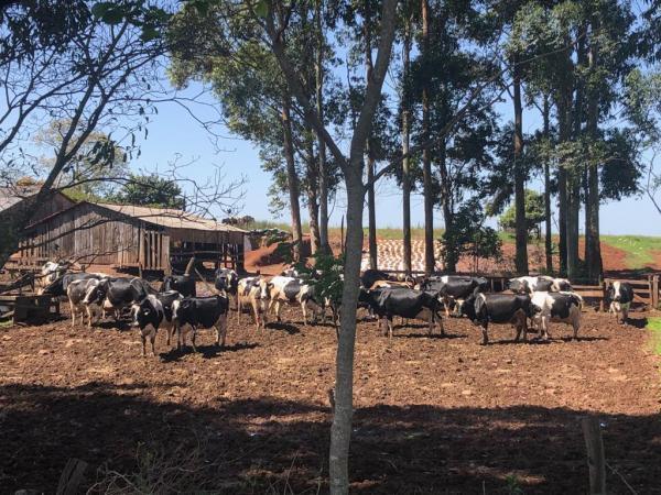 IBGE: Rio Grande do Sul é o quarto Estado com mais estabelecimentos agropecuários no país