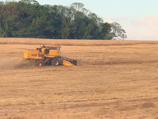 Produtividade média do trigo atinge 2,9 mil quilos por hectare na Região Noroeste