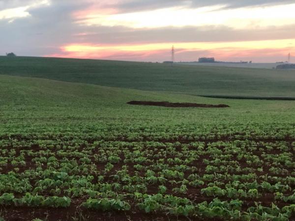 Semeadura de soja avança e chega a 53% da área projetada para o Rio Grande do Sul