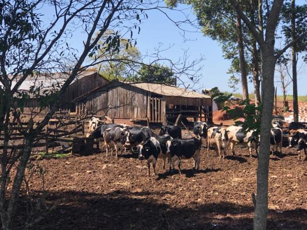 Produção de leite cresceu no Rio Grande do Sul em 2019