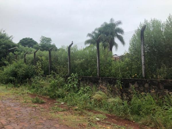 Coronel Bicaco: Edil reclama da falta de limpeza em terrenos baldios no perímetro urbano