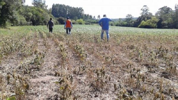 Técnicos do MAPA irão verificar as condições das lavouras gaúchas afetadas pela seca