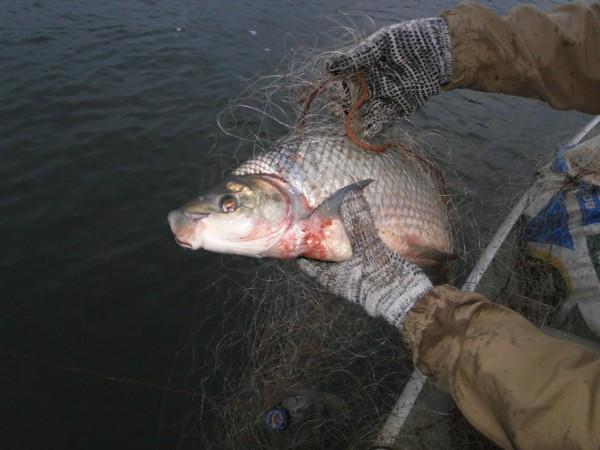 Patram recolhe material de pesca em Pinheirinho do Vale