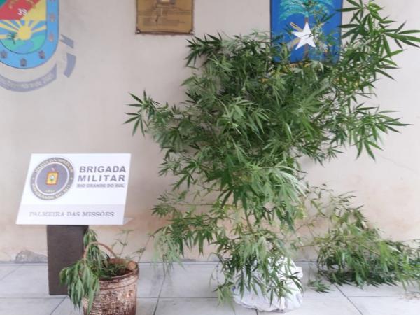 Homem é preso por tráfico de drogas em Palmeira das Missões