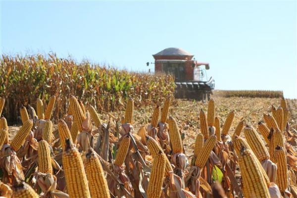 Chiapetta sediará abertura da colheita do milho 2019/2020
