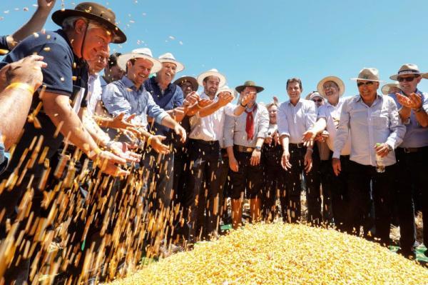 Abertura oficial da colheita de milho no Rio Grande do Sul aconteceu em Chiapetta