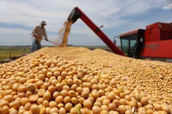 Produtores poderão ter queda superior a 30% na safra de soja 2019/2020