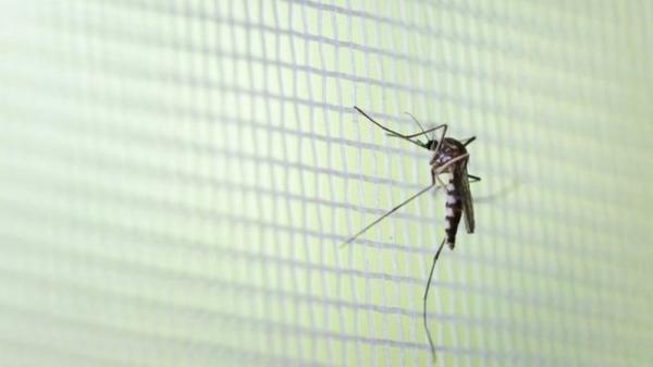 Tenente Portela está em alerta com aumento no número de casos suspeitos de dengue