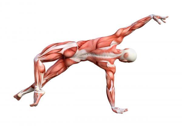 Qualidade dos Movimentos do Corpo Humano