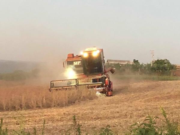 Colheita da soja no Estado termina com 45,8% de perdas