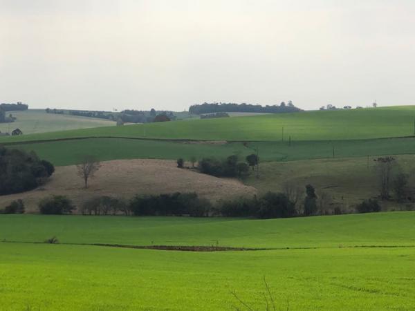 Plantio de trigo se aproxima do término no Rio Grande do Sul
