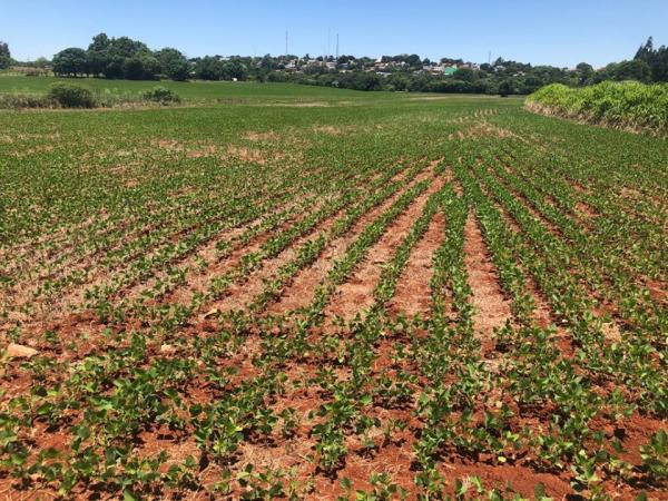 Implantação de política pode reduzir custos de plantio e potencializar produção no RS