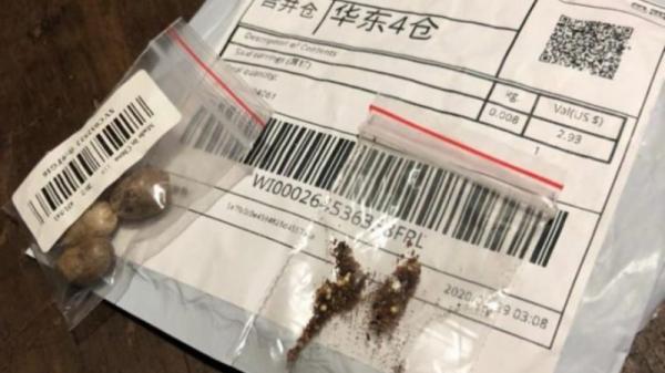 Governo do RS alerta sobre recebimento de sementes não solicitadas do exterior
