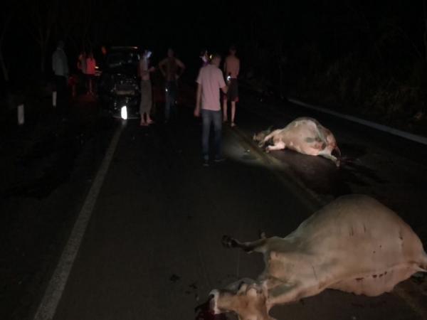 Veículo colide contra animais na BR 468 em Tiradentes do Sul