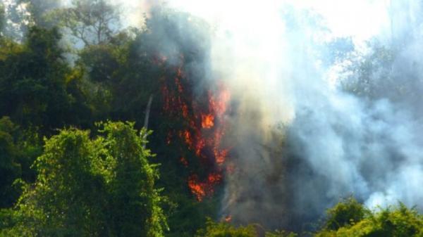 Incêndio em parque na Argentina pode ser avistado do lado brasileiro
