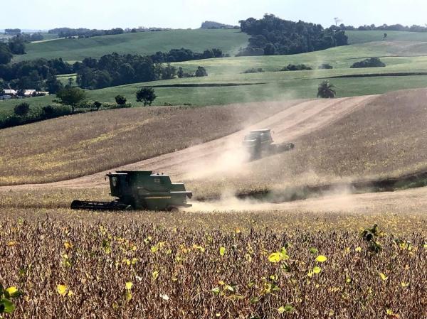 Para consultoria, produção de soja do Brasil pode ser reduzida devido ao clima