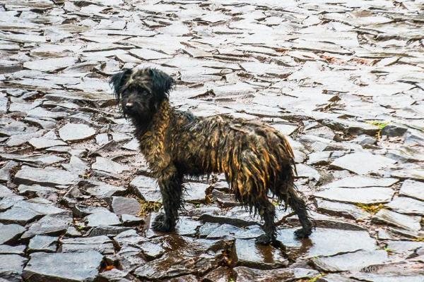Abandono de animais: A triste realidade de uma crueldade