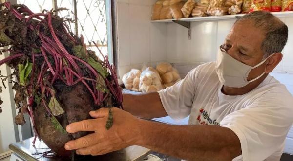 Padeiro colhe beterraba de 6,8 kg em Uruguaiana