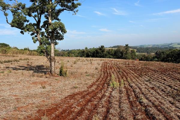Rio Grande do Sul tem 167 mil hectares semeados com milho