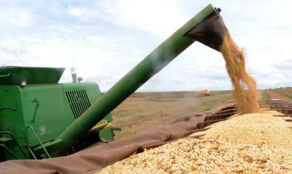 Safra de grãos no Brasil deve atingir o volume recorde de 260,5 milhões de toneladas neste ano