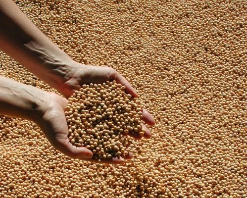 Produtores do Rio Grande do Sul preparam o plantio da soja