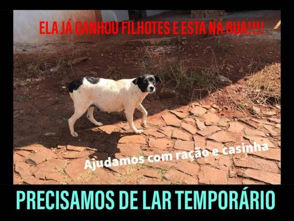 Amicão procura lar temporário para cachorra e filhotes abandonados em Tenente Portela
